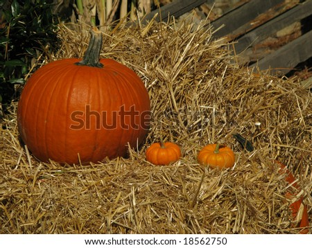 Pumpkins and two gourds for harvest