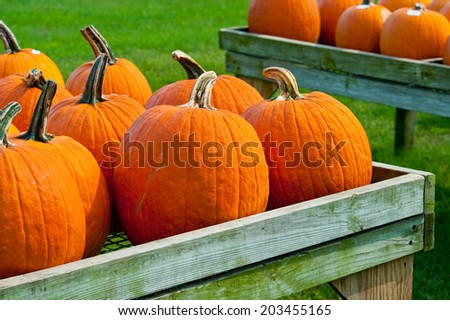 Pumpkins at fall road stand against green grass backdrop - stock photo