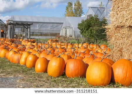 Pumpkins at farmers' market, New England - stock photo