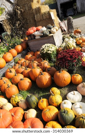 Pumpkins at farmers market, New England (USA) - stock photo