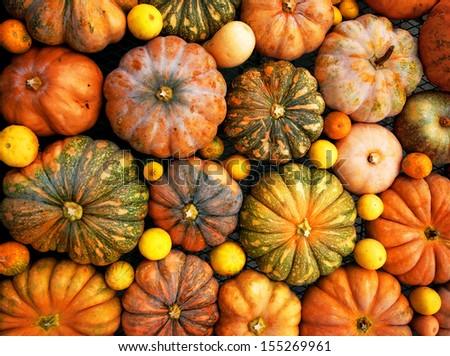 pumpkins, autumnal harvest, small pumpkin, texture or autumn background - stock photo