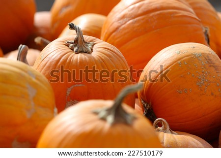 Pumpkins background - stock photo