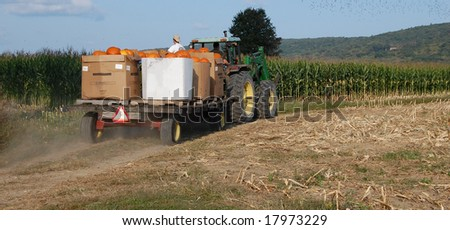 pumpkins being hauled on tractor by farmers with flock of birds flying over corn  field - stock photo
