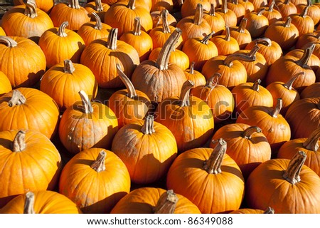 Pumpkins bunched together on a Vermont farm stand - stock photo
