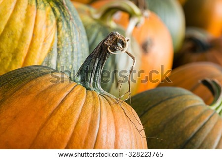 Pumpkins closeup in autumn - stock photo