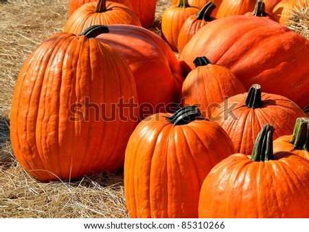 pumpkins for sale at local farm in rural georgia usa