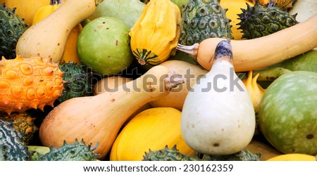 Pumpkins, hedged gourds, butternut pumpkins. Harvest background. - stock photo