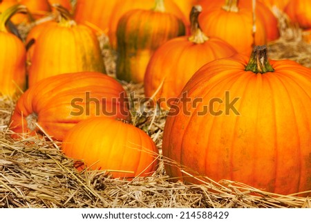 Pumpkins in a field of straw. Close up detail with selective focus on a large foreground pumpkin. Background for fall, autumn, halloween, Thanksgiving, seasonal display. - stock photo