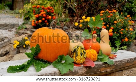 Pumpkins in autumn garden. - stock photo