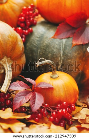 Pumpkins in autumnal leaves - stock photo
