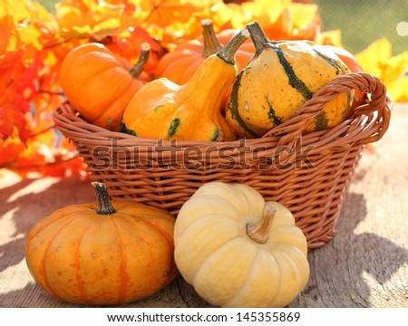 Pumpkins in basket. Defocused colorful leaves in the background. - stock photo