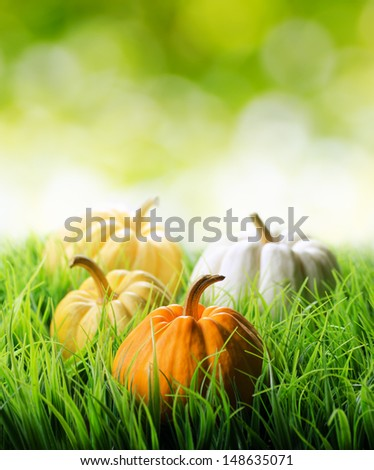 Pumpkins in green grass on natural background.