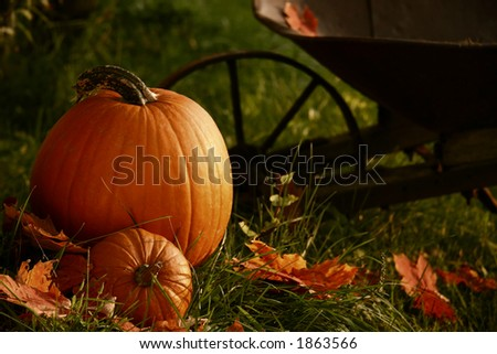 Pumpkins in the grass ready for halloween - stock photo