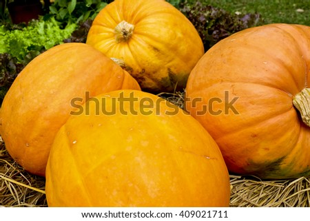 Pumpkins in the Park - stock photo