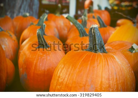 Pumpkins in the store - stock photo