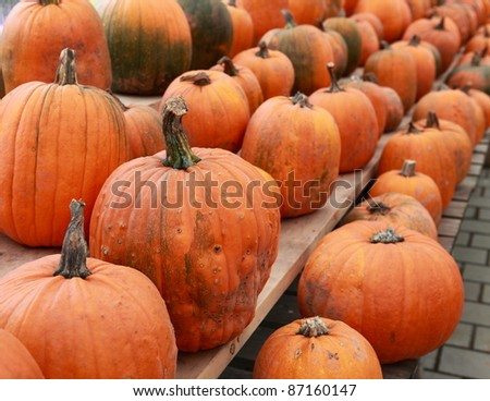 Pumpkins lined up for sale - stock photo