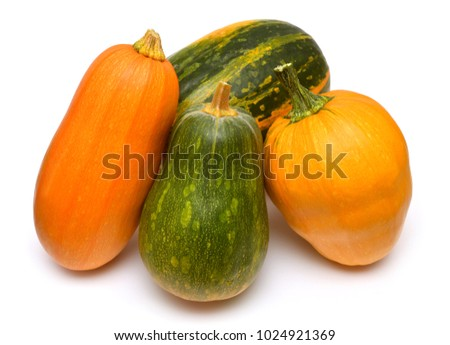 Pumpkins of different kinds isolated on white background