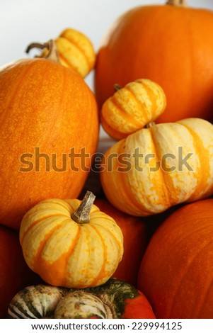Pumpkins of varying sizes. - stock photo