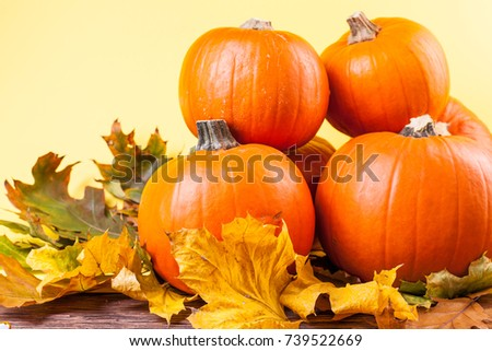 pumpkins on a yellow background