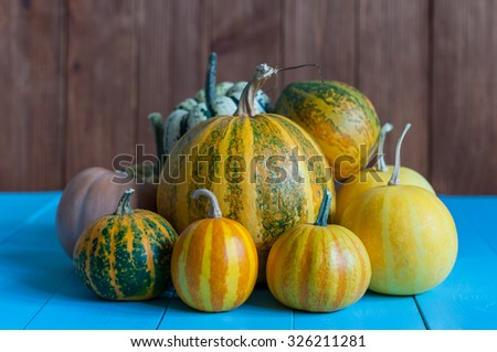 Pumpkins on rural dark and blue wooden background. Pumpkin Autumn harvest, close-up. - stock photo