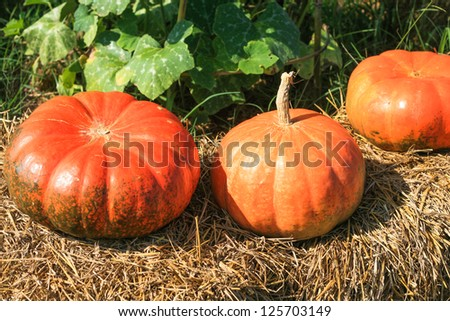 Pumpkins on straw - stock photo