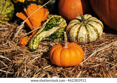 pumpkins on the hay, autumn decoration for thanksgiving