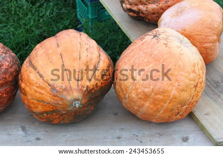 Pumpkins on wooden benches for autumn sale - stock photo