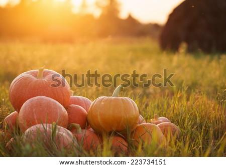 pumpkins outdoor - stock photo