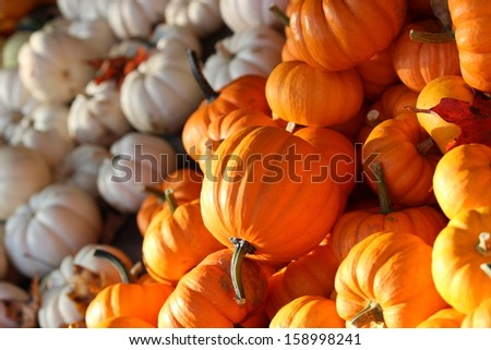 Pumpkins & Squash - stock photo