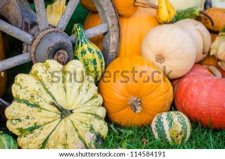Pumpkins - various kinds - stock photo