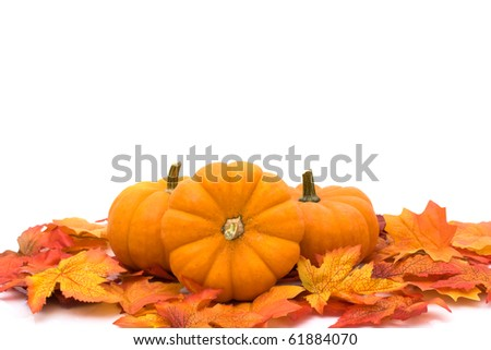 Pumpkins with fall leaves isolated on white, Autumn scene - stock photo