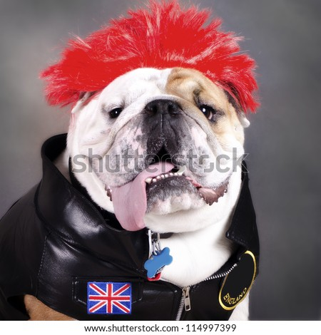 punk rock bulldog in Halloween Costume - stock photo