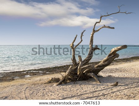 Punta Cana Beach - stock photo