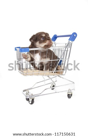 pup in grocery cart