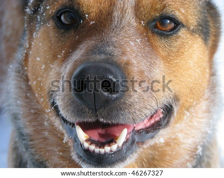 Pup in the snow - stock photo