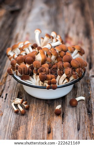 Puplar o shimeji mushrooms - stock photo