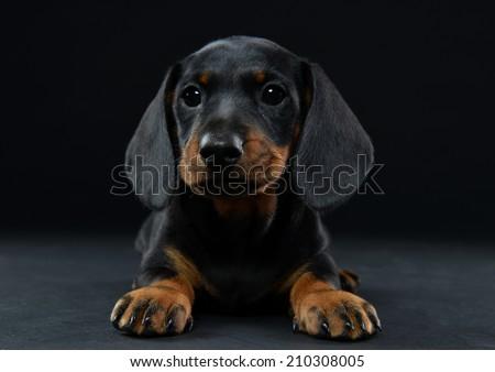 puppies - stock photo