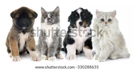 puppies and kitten  in front of white background - stock photo
