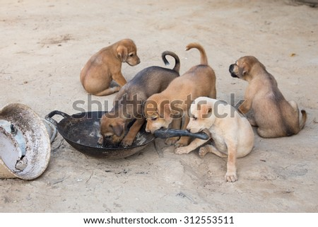 Puppies eat are hungry eat poor scramble. - stock photo