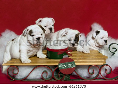 Puppies jumping on the sleigh - stock photo