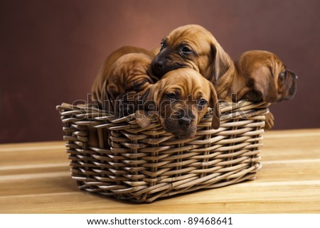 Puppies, wicker basket