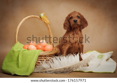 Puppy and basket with easter eggs, horizontal, studio - stock photo