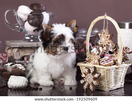 puppy and chocolate biscuits - stock photo