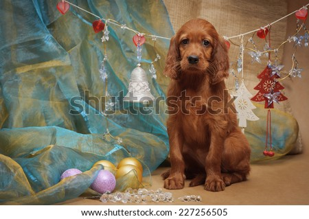 Puppy and Christmas decorations. Horizontal. Studio.