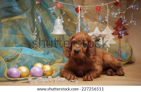 Puppy and Christmas decorations. Horizontal. Studio. - stock photo