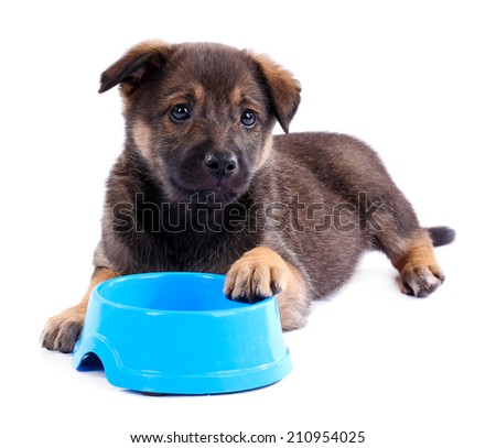 Puppy and empty blue bowl isolated on white - stock photo