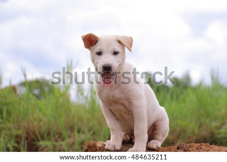 puppy and green background