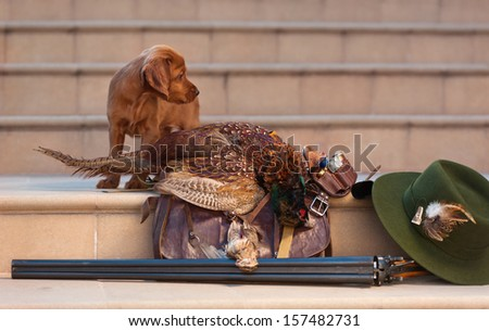Puppy and hunting accessories, horizontal, outdoors - stock photo