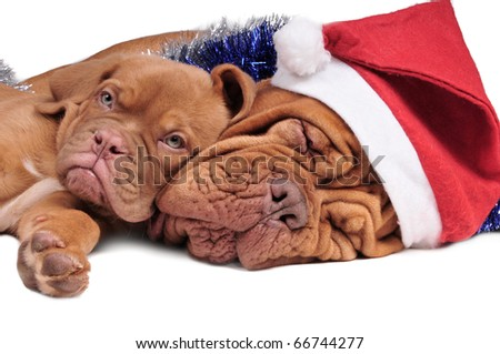 Puppy and its mom in Christmas decorations - stock photo