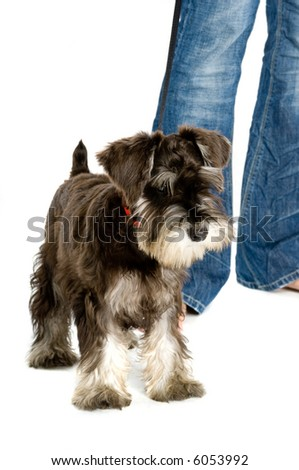 Puppy and its owner off for a walk - stock photo